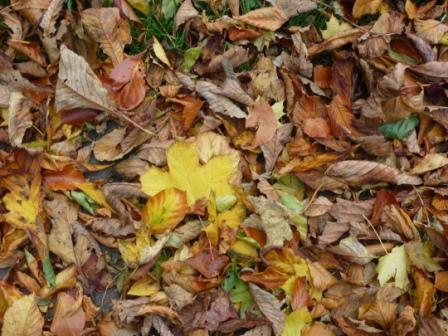 Leaves in Greencroft Valley