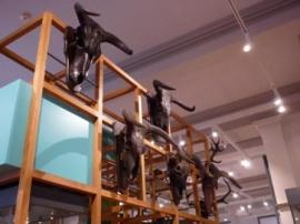 Auroch Skulls, Harris Museum