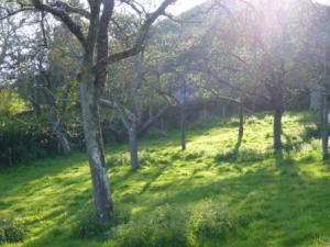 Avalon Orchard Calan Mai