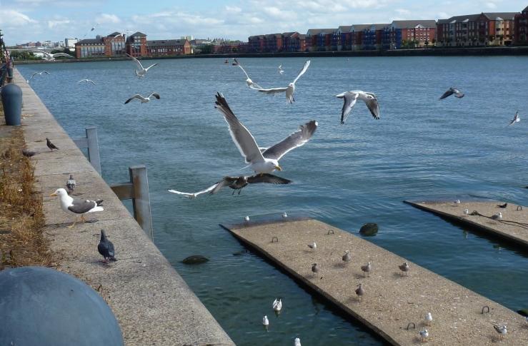 Gulls, Riversway Dockland