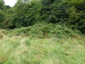 Bramble, Well Field, Penwortham