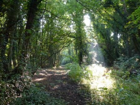 Faery Lane, Church Wood, Penwortham