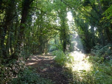 Faery Lane, Church Wood, Penwortham