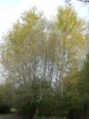 Two Birches, Penwortham