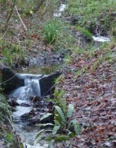 Fish House Brook