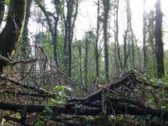 Church Wood, Penwortham