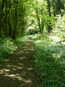 Faery Lane, Spring