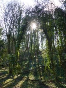 Faerie Gate, Fairy Lane