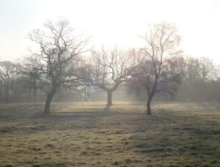 Middleforth Green, Spring Mist 007 - Copy