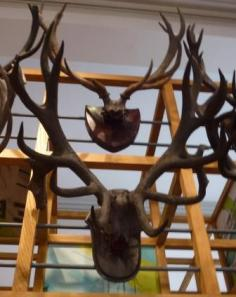 Antlers, the Harris Museum, Preston