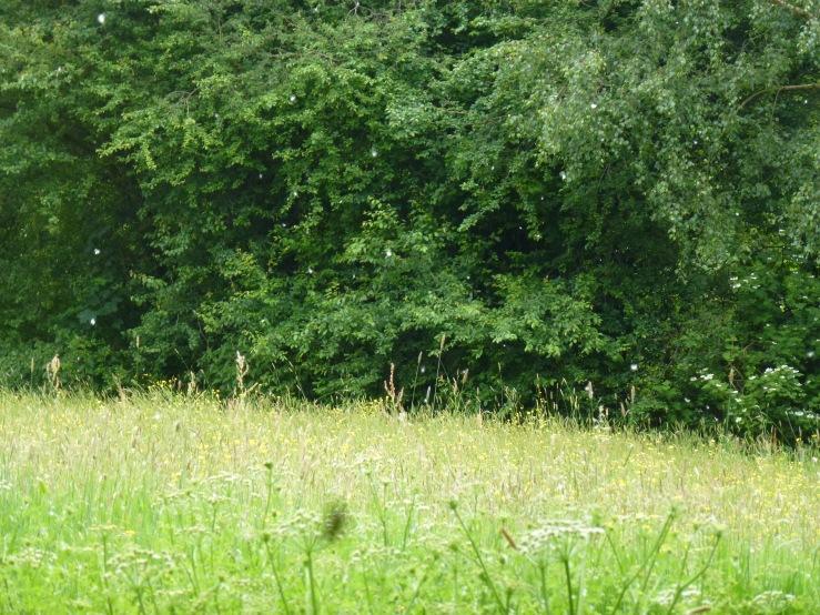 Unsung Meadow