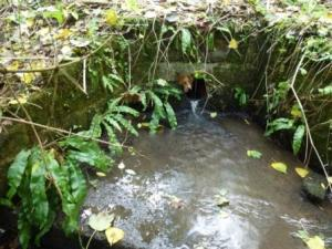 Fish House Brook, source