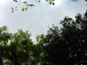 Sky above falling ash bough
