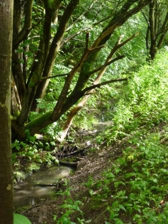 Fish House Brook Tributary