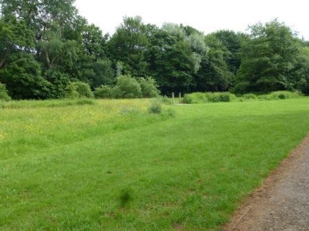 Meadows, May