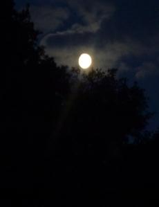 Moon Beam, Greencroft Valley