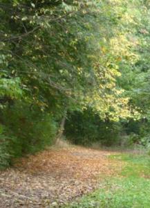 Autumn Leaf-Gold, Greencroft Valley