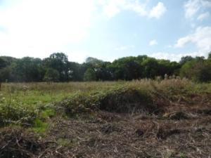 Scrubby Field