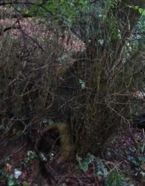 Story Door, Penwortham Wood