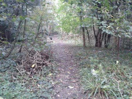 Fairy Lane