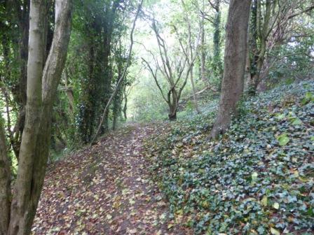 Woodland, Greencroft Valley