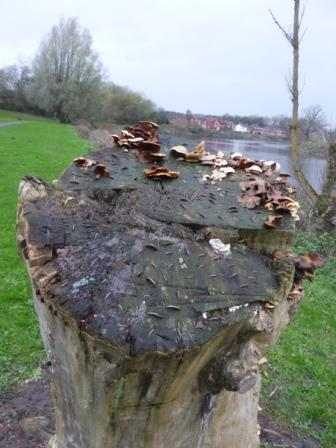 Coin Tree, Middleforth
