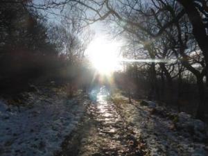 Pathway, Tockholes Wood