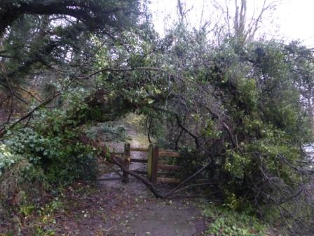 Entrance to Penwortham Wood - Here be wrens!