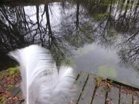 Heron Feathers, Carr Wood Pond