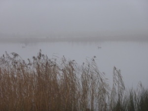 Brockholes in the Mist II
