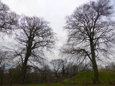 Beech trees and castle motte