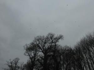 Crows over the Dyke of Arfderydd