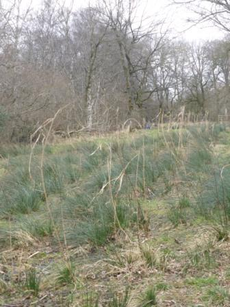 Reeds of Arfderydd
