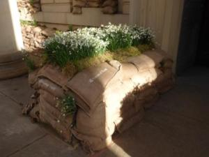 Snowdrops in Sandbags outside Manchester Art Gallery