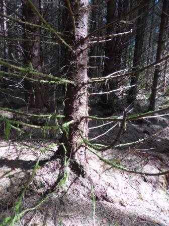 Sidhe Forest II