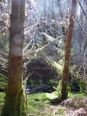 Sidhe Forest