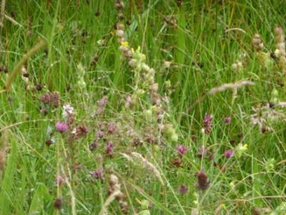 Meadow-rain I
