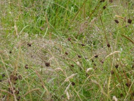 Meadow-rain III