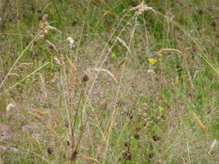 Meadow-rain II