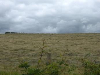 Mowed Fields from Douglas