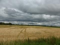Fields from Douglas