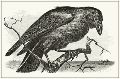 raven-clipart-we-heart-it-public-domain
