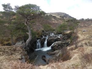 Loch Awe and Cuillich Wood 137 - Copy
