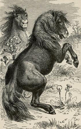 Kelpies, 1886, pub dom - Copy