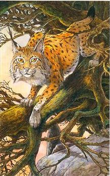 Lynx Wildwood Tarot