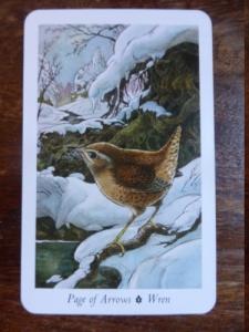 Wren - Page of Arrows - Wildwood Tarot