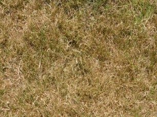 Scorched Lawn