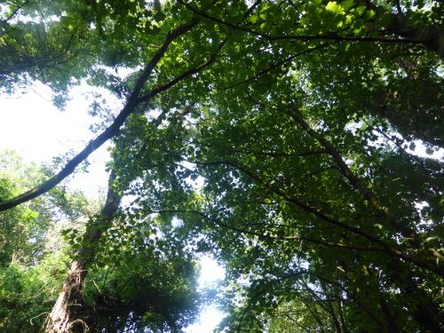 Branches Fairy Lane
