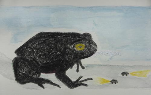 A Black Forked Toad Med II