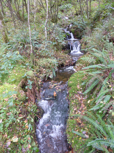 Stream near Pryderi's Grave